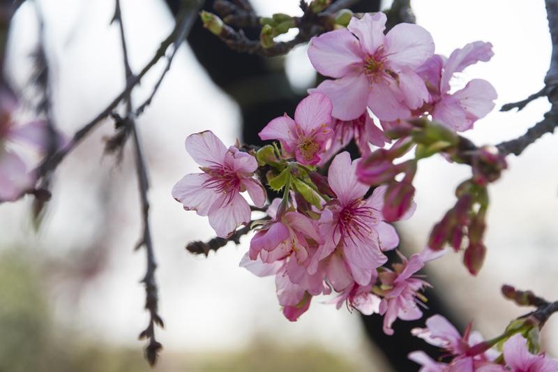 芬園花卉生產休憩園區15.jpg