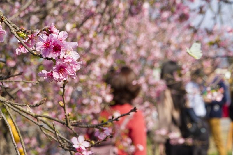 芬園花卉生產休憩園區17.jpg