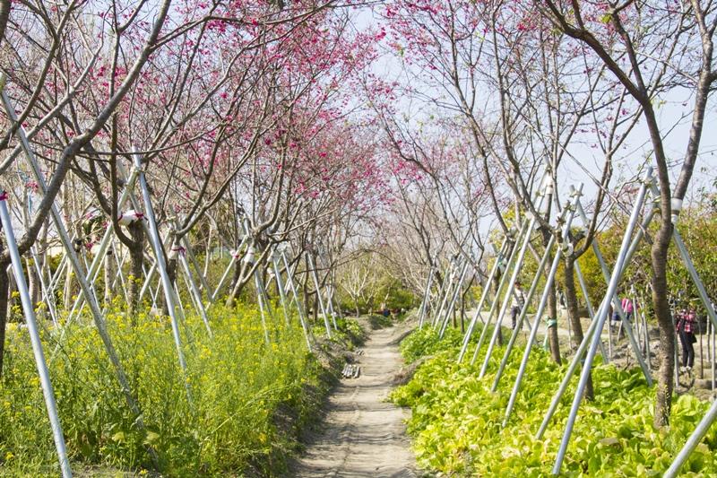 芬園花卉生產休憩園區23.jpg