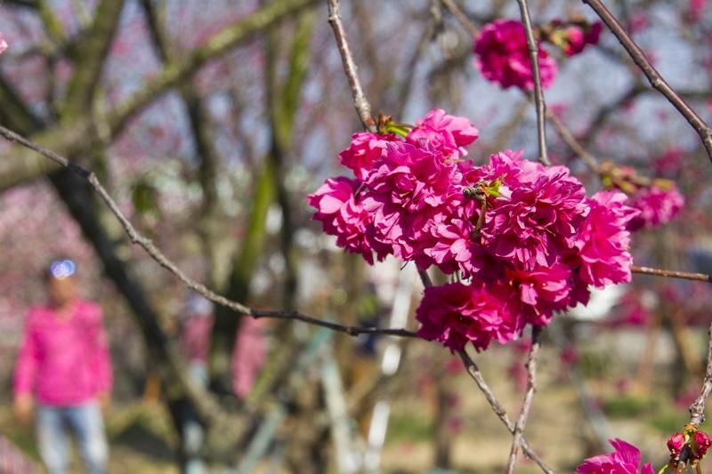 芬園花卉生產休憩園區4.jpg
